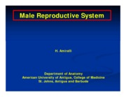 Male Reproductive System(1)