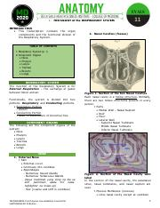 1. Histology of the Respiratory System