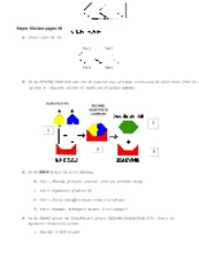 Enzyme_Foldable_Instructions