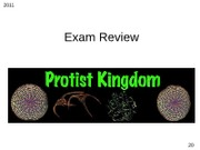 Protist Test Review