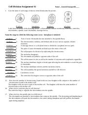 Cell division Assignment#2.docx - Cell Division Assignment ...