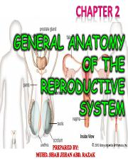 CHAPTER 2 - GENERAL ANATOMY OF THE REPRODUCTIVE SYSTEM