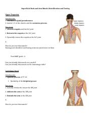 Upper Extremity Muscle Activity Part 1