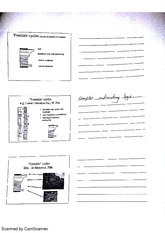 Stratigraphy Cycles Lecture Notes 3