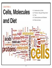Chapter4 Cells, Molecules, Nutrients-Biology100
