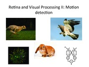 Lecture 7 Retina and Visual Processing II.pdf