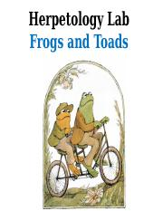 frogs and toads.pptx