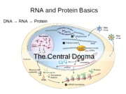 September 7 - RNA and Proteins