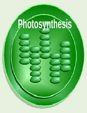 Photosynthesis+-+light+reactions.ppt