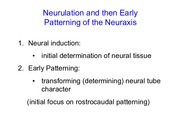 3. Neurulation and Rostrocaudal patterning(1) copy.pdf