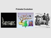 15_primate_evolution_POST