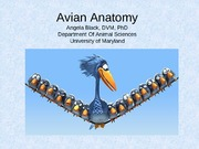 Avian anatomy 2010