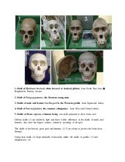 Human and Ape Skull Description and Image.pdf