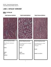 HISTOLOGY  WORKSHEET for LABEX 1 F16.docx