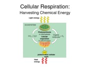 Biology, Cellular Respiration Notes