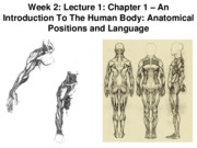 Z331 Fall 2010 Ecampus Week 2 Lecture 1 Anatomical Positions Posted