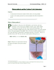 Lab 06 Photosynthesis and the Carbon Cycle(1)