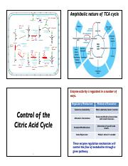 Lecture_6-Control of TCA Cycle Spring 2016 Slides.pdf