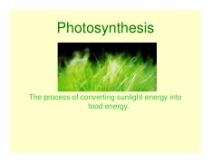 Photosynthesis Power Point.pdf