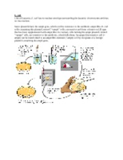 plasmid transformation lab report Activity 4: transformation of e coli using green lab student activity: transformation of the per µg of plasmid dna used for the transformation a.