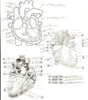 Heart Diagrams Study Guide