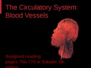 Circulatory System - Blood Vessels