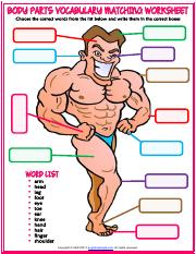 body parts vocabulary esl matching exercise worksheet for