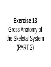 A&P I LAB - EXERCISE 13B (APPENDICULAR MUSCLES).ppt
