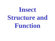 intro to insects