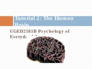 Tutorial+3_The+human+brain(2)