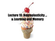 2_21W Lecture_16_Neuroplasticity_Learning_and_Memory
