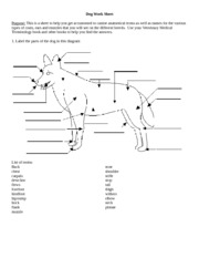 Dog Work Sheet