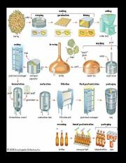 Overview of beer production