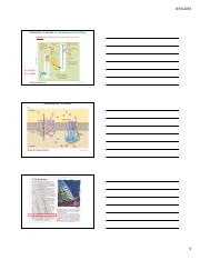 MIMG101 Energy Generation II Photosynthesis Slides x3.9
