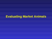 animal_evaluation