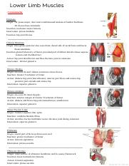 Dissection I-lower limb muscles(ORIGIN, INSERTION, INNERVATION AND ACTION).pdf