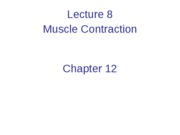 Lecture 8 Muscle Contraction