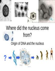02 dna nucleus origin (5).ppt