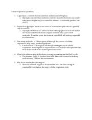 Cellular respiration questions