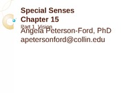 Chapter 15 Special Senses Part 1 Vision