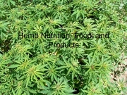 Hemp Project ppt