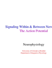 3 neuronal signals 2 - action potentials - lecture slides
