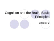 Chapter 2-Cognition and the Brain