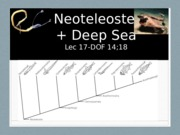 17-postDeep Sea-Neoteleosts 2016 12.05.38 PM