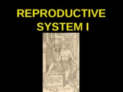 ANP 300 - Lecture 24 - Reproductive System I