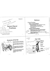 Sensory neural processes notes