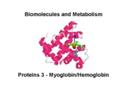 Biomolecules Lecture_3_Proteins