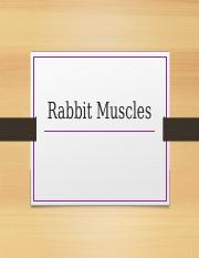 Rabbit_Muscles.pptx
