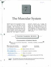 muscular system packet key.pdf