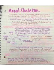 Axial Skeleton Notes